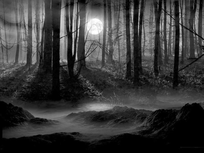cropped-woods.jpg